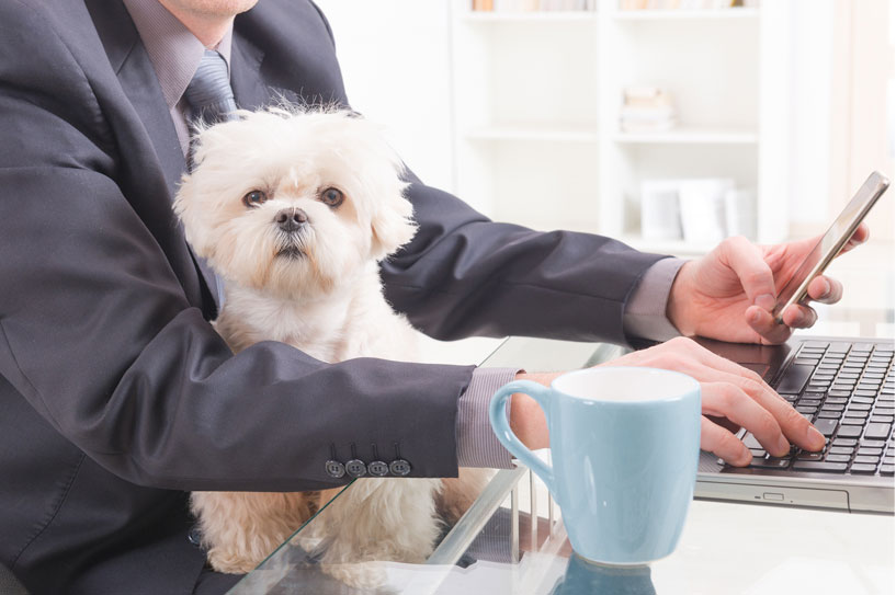 Should Your Workplace Go Pet-Friendly?